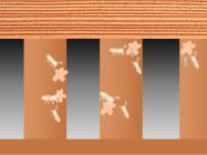 シロアリのイメージ