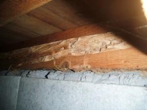 シロアリの被害木材